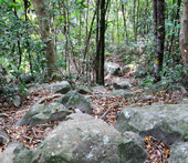 Trail between the Teluk beach and Flora Bay on Besar