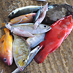 Trincomalee fish market